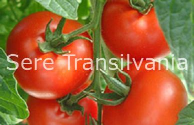 Creșterea tomatelor în solarii