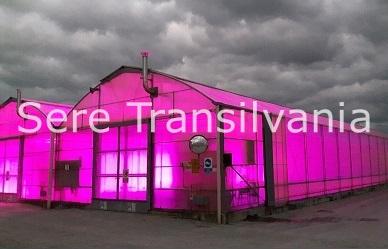 Lumina artificială pentru plante: studiu de caz - busuioc