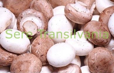 De ce un business cu ciuperci?