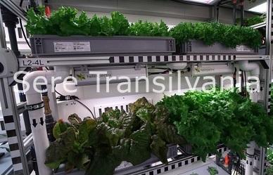 O seră din Antarctica sărbătorește prima recoltă de legume