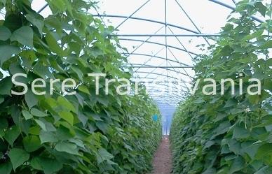Palisarea plantelor în solar
