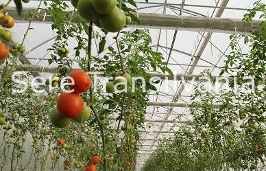 Informații utile despre Programul Tomata 2020
