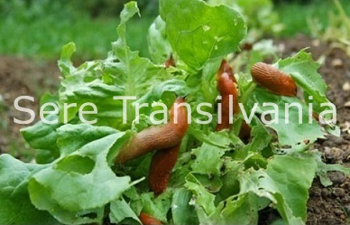 Patru soluții eficiente pentru combaterea dăunătorilor în agricultura ecologică