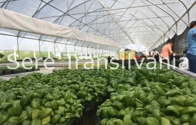De ce să cultivăm în seră sau solar?
