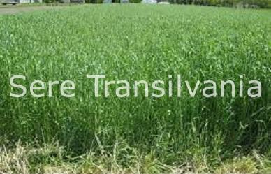Culturi verzi – o alternativă ieftină la îngrășăminte