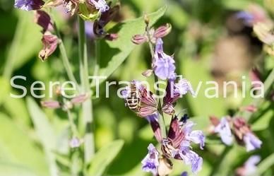 5 plante companion nelipsite din grădina ecologică
