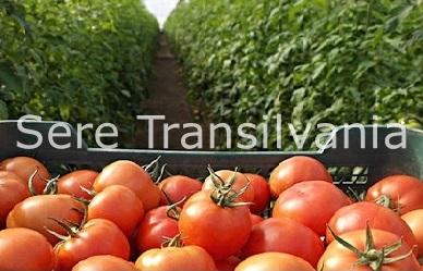 România, locul 27 la producția mondială de tomate 2018