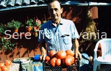 Cum puteți obține semințe de roșii din propria grădină